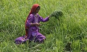 کاشت کاروں کو درپیش مسائل پر حکومت اور اپوزیشن ہم آواز