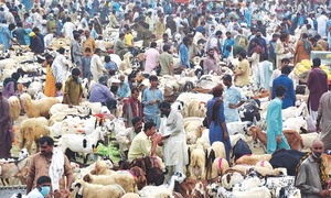 NCOC allows more but small cattle markets