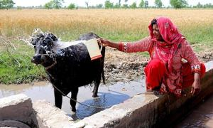 Who owns groundwater in water-stressed Pakistan?