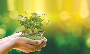 Nature needs conservation