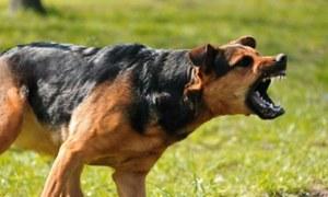 اگر کتا آپ کے پیچھے بھاگنے لگے تو کیا کریں؟
