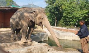 Release of Kaavan the elephant reignites zoo debate in Pakistan