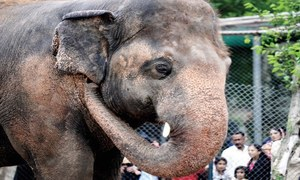 Vets arriving in Islamabad by August end to assess Kaavan's health