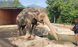 پاکستان کو بطور تحفہ ملنے والا ہاتھی کمبوڈیا کے حوالے کیوں کیا جارہا ہے؟