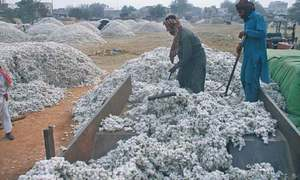 Sindh loses 0.5m cotton bales to rains