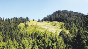 Huge swathes of Haripur forest land turned into housing schemes