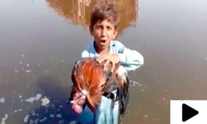 'گندا پانی پینے سے میرا مرغا مرگیا'، دکھی بچہ سندھ حکومت پر برس پڑا