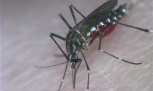 Bisham reports eight more dengue cases