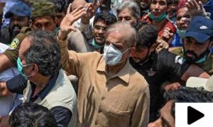 شہباز شریف لاہور ہائیکورٹ سےگرفتار