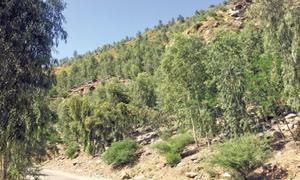 Afforestation helps minimise landslides in Shangla