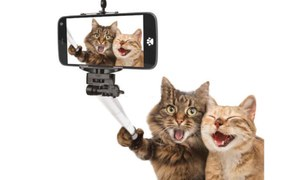 Society: Crazy for a selfie!