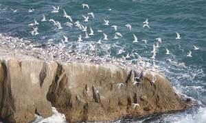پاکستان کی ساحلی پٹی پر موجود جزائر کی ماحولیاتی اہمیت کیا ہے؟