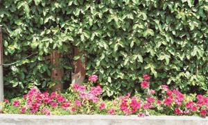 GARDENING: 'WHAT PLANTS ARE SUITABLE FOR OUR COMMUNITY GARDEN IN KARACHI?'
