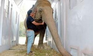 Kaavan gets new enclosure for training before departure