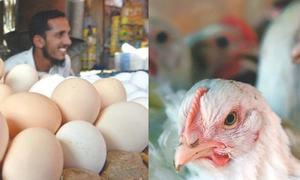 چینی اور آٹے کے بعد مرغی اور انڈوں کی قیمتوں میں ہوشربا اضافہ