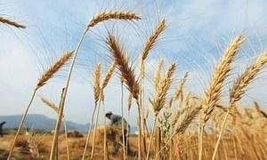 1.4m tonnes of wheat due in Dec-Feb