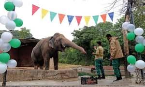 اسلام آباد: کاون ہاتھی کو کمبوڈیا روانہ کرنے کی تیاریاں