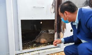 Kaavan, Islamabad's lonesome elephant, starts new life in Cambodia