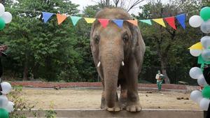 دنیا کا 'سب سے تنہا ہاتھی' پاکستان سے الوداع