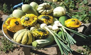 GARDENING: 'WHICH VEGETABLES CAN BE GROWN ON A ROOFTOP IN RAWALPINDI?'