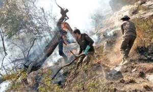 Trees destroyed in Dera Ismail Khan, Haripur fires