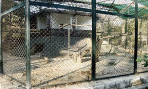 Ministry to give Marghazar Zoo a makeover