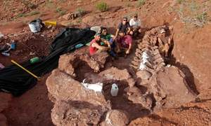 Scientists claim finding fossils of largest dinosaur