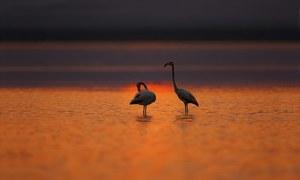 عالمی اہمیت کی حامل 'رامسر جھیل' کی تباہی کیسے ہوئی؟