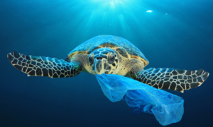 The year 2050 will see more plastic in the ocean than fish. This campaign aims to change that