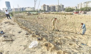 200-acre urban forest being developed by city's seashore
