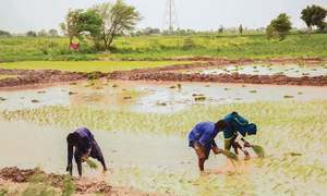 Sizzling heat and water-logging of Jacobabad