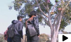 راولپنڈی میں روٹھے پرندوں کو منانے کیلئے درختوں پر گھونسلے لگا دیے گئے