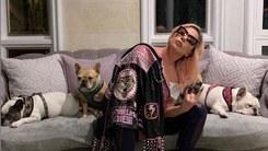 Lady Gaga offers $500,000 reward for stolen French Bulldogs