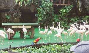 وزیروں کا ٹھکانا، پرندوں کا آشیانہ، واہ کیا دوستانہ