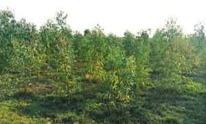 Billion tree project is penniless