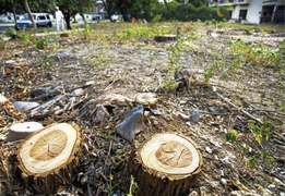 LHC bans tree felling to stop environment degradation