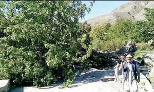 Chitral loses iconic 'tree of birds' to strong winds