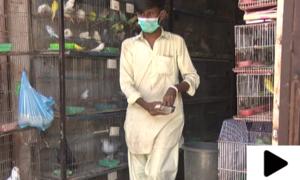 کراچی میں عید کے موقع پر لاک ڈاؤن کے دوران پرندوں کی مارکیٹ کھولنے کی اجازت