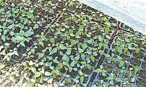 GARDENING: 'I HAVE GOT AN ONGOING ISSUE WITH SEED SPROUTING'
