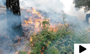 شدید گرمی سے لوئر چترال کے جنگلات میں آگ لگ گئی