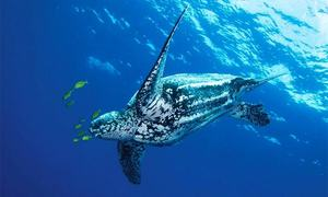 Pakistan losing traditional nesting ground for sea turtles