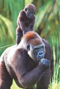 Father's Day special: Outstanding dads in the animal kingdom