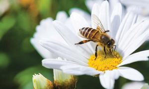 Focus: Conversation with a honeybee