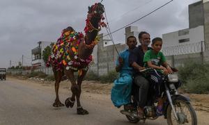 Prices of sacrificial animals see sharp increase in Rawalpindi
