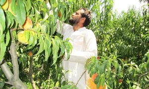 Improved watercourses bring  respite to Swat farmers