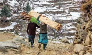 KP cabinet okays Rs525m to shift seized timber from Chitral to Chakdara