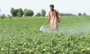 Crops at risk as dams not full enough