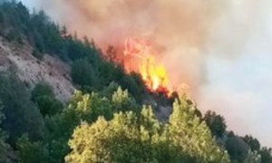 Fire erupts in Chitral Gol National Park