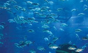 Fish aquariums coming up in Punjab's wildlife zoos