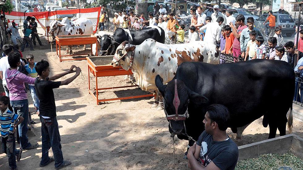 قربانی کے لیے لاہور کے علاقے سمن آباد میں لائے گئے مہنگے اور بھاری جانور جن کے بارے میں کہا جا رہا ہے کہ ہر گائے کا وزن لگ بھگ 1400 کلو اور مالیت دس لاکھ ہے، گزشتہ کچھ عرصے کے دوران لوگوں میں مہنگے جانور خریدنے کے رجحان میں تیزی دیکھنے میں آئی ہے جس کے با